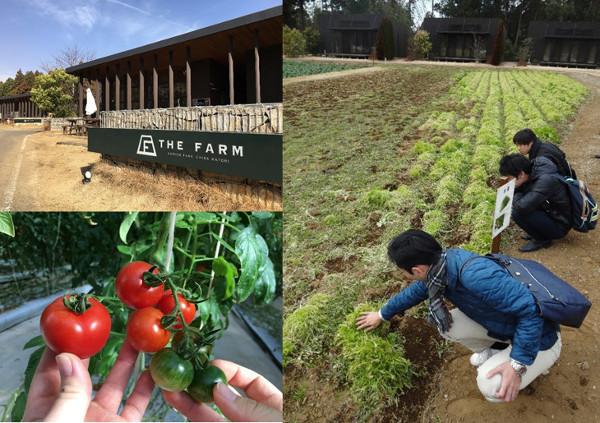 THE FARMの農園