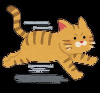 s-run_cat